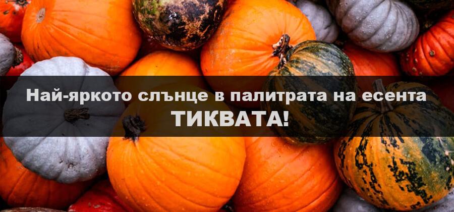 Най-яркото слънце в палитрата на есента -ТИКВАТА!